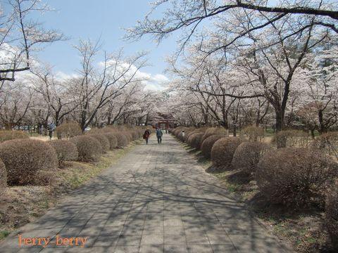 2011.5.8 聖光寺5.jpg