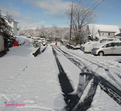 2010 4 17 雪の朝2.jpg